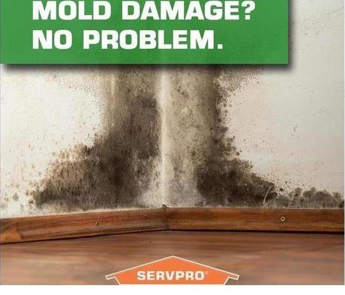 Mold Remediation Next Steps After Finding Mold In your Home